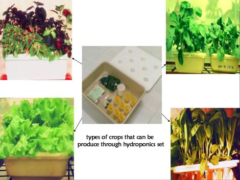 crops-that-can-be-produce-using-hydroponic1