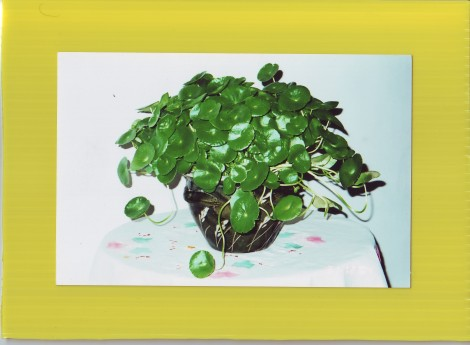 hydroculture plants2
