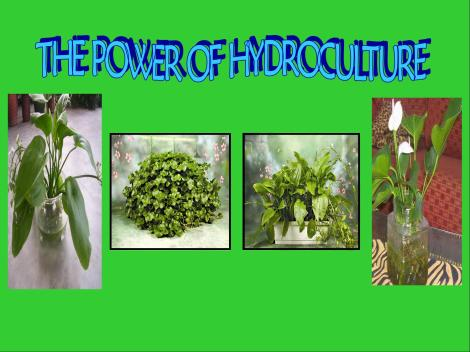 the-power-of-hydroculture